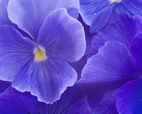 The 10 Prettiest Flowers That Bloom In Fall