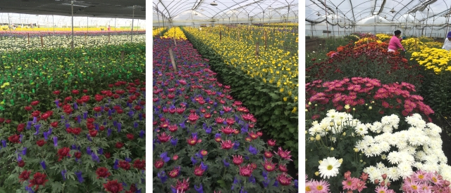 Enjoy-flowers-farms