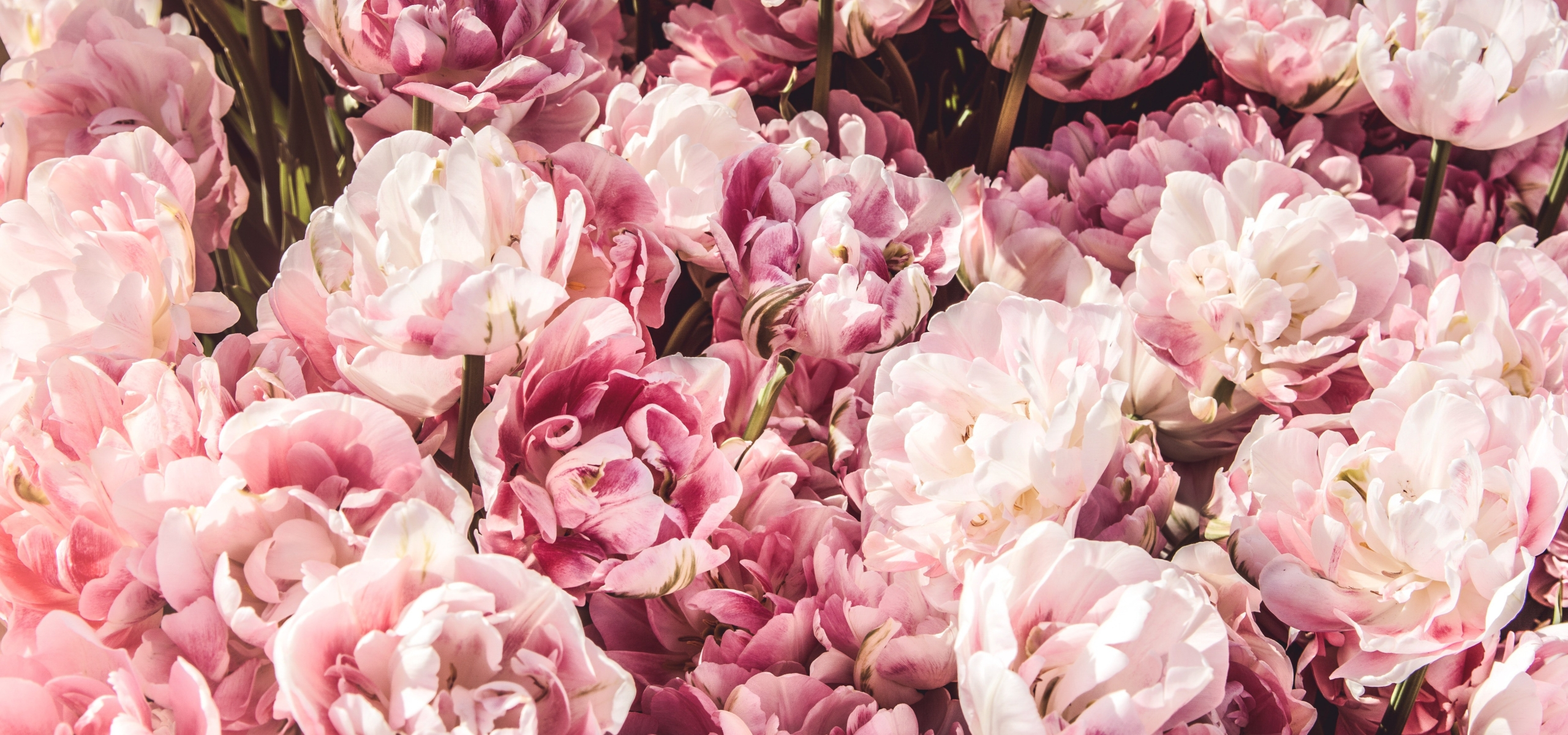 The 8 most popular wedding flowers decorating with flowers enjoy were wild about wedding flowers so weve rounded up the top 8 most popular wedding flowers and made a list just for you youll see many familiar blooms mightylinksfo
